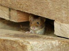 Die Maus schien mich freundlich anzulächeln...