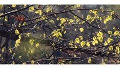 Die Melancholie des Herbstes...