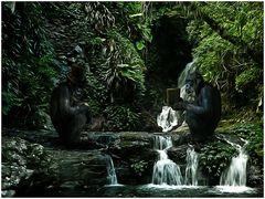Die Menschen mit all ihren Gewohnheiten, machen sich beständig zum Affen