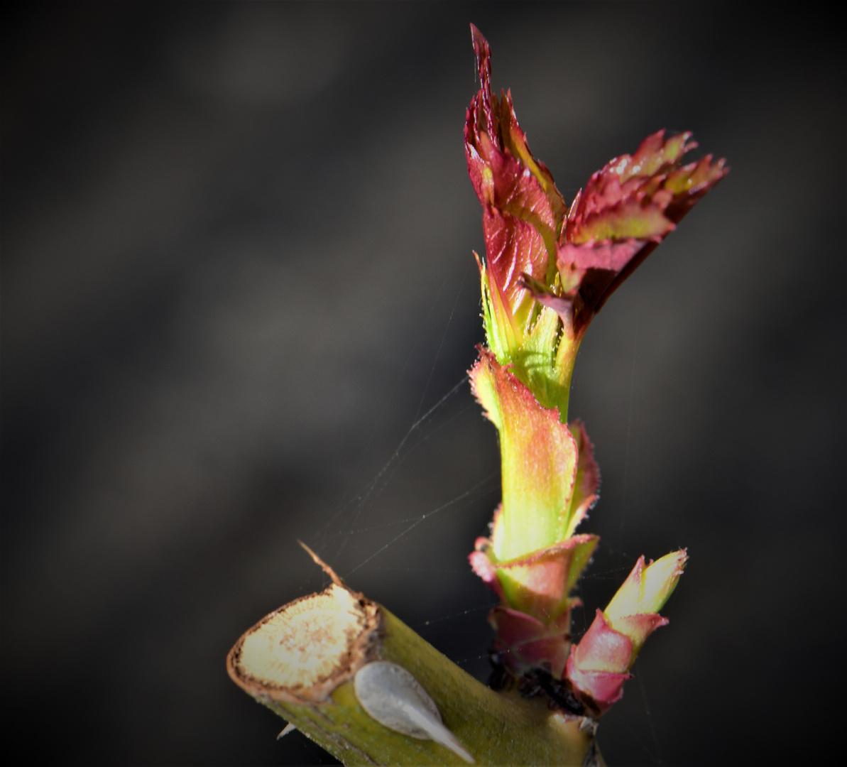 Die Mittwochsblümchen müssen noch wachsen ;-))