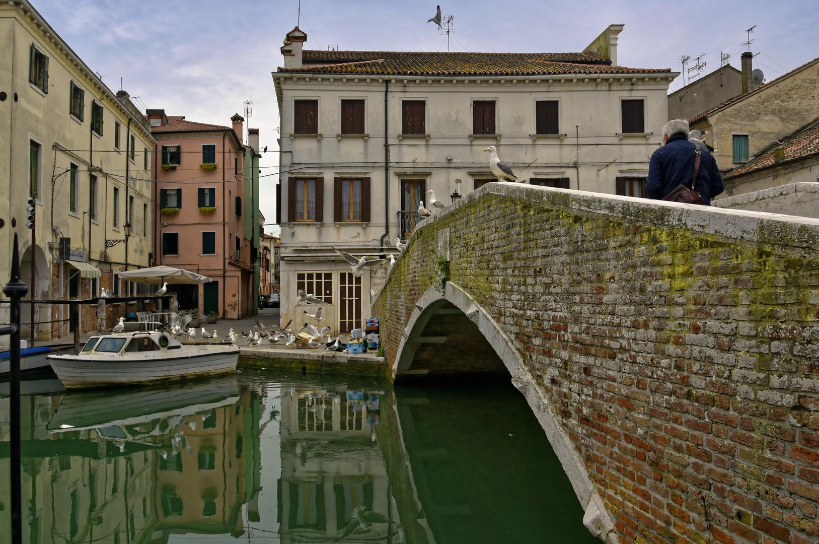Die Möven von Chioggia