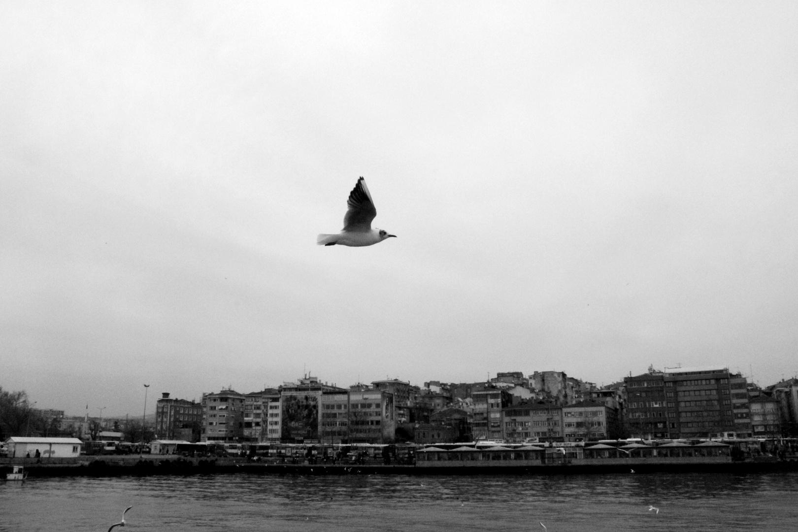 Die Möwe aus Istanbul