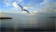 die Möwe über dem Meer