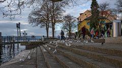 die Möwen am Bodensee