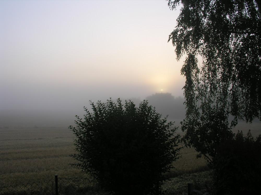Die Morgensonne kocht den Nebel auf.