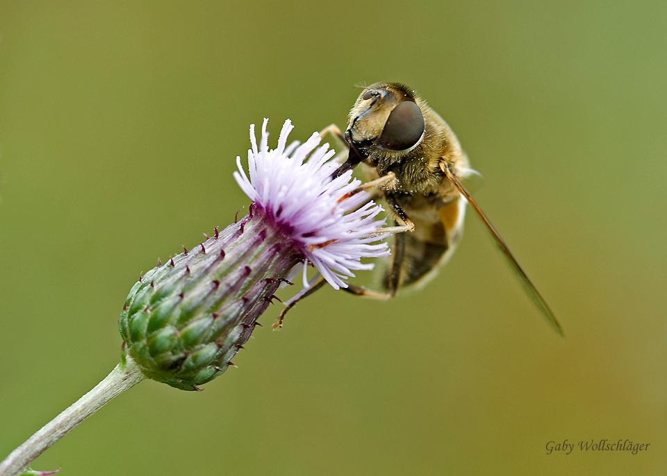 Die Mundwerkzeuge... Foto & Bild | tiere, wildlife, insekten Bilder ...