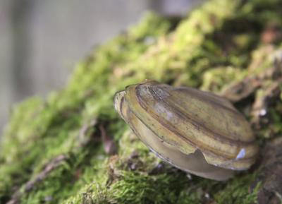 die Muschel und der Baum
