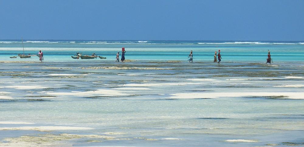 ...die Muschelsammlerinnen von Sansibar...