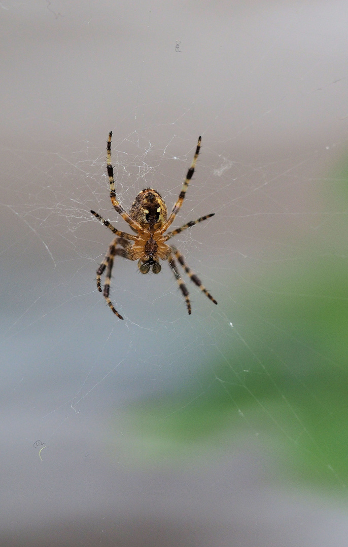 Die muss aus dem Archiv raus ... überall sind Spinnweben ....