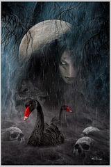 Die Nacht der schwarzen Schwäne