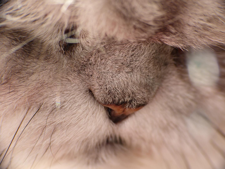 Die Nase meiner Katze
