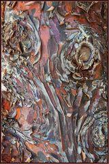 Die Natur als Künstler: Baumrinde