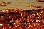 die Natur am Ende des Herbstes