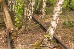 Die Natur holt sich die Gleise zurück
