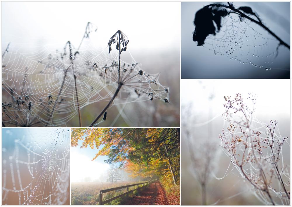 die Natur im Herbstkleid