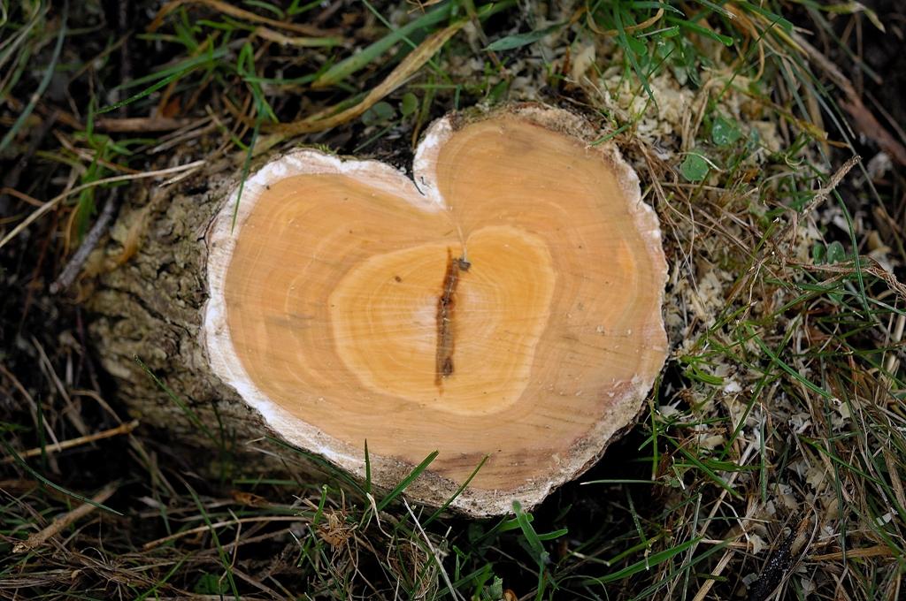 Die Natur schenkt uns ein Herz