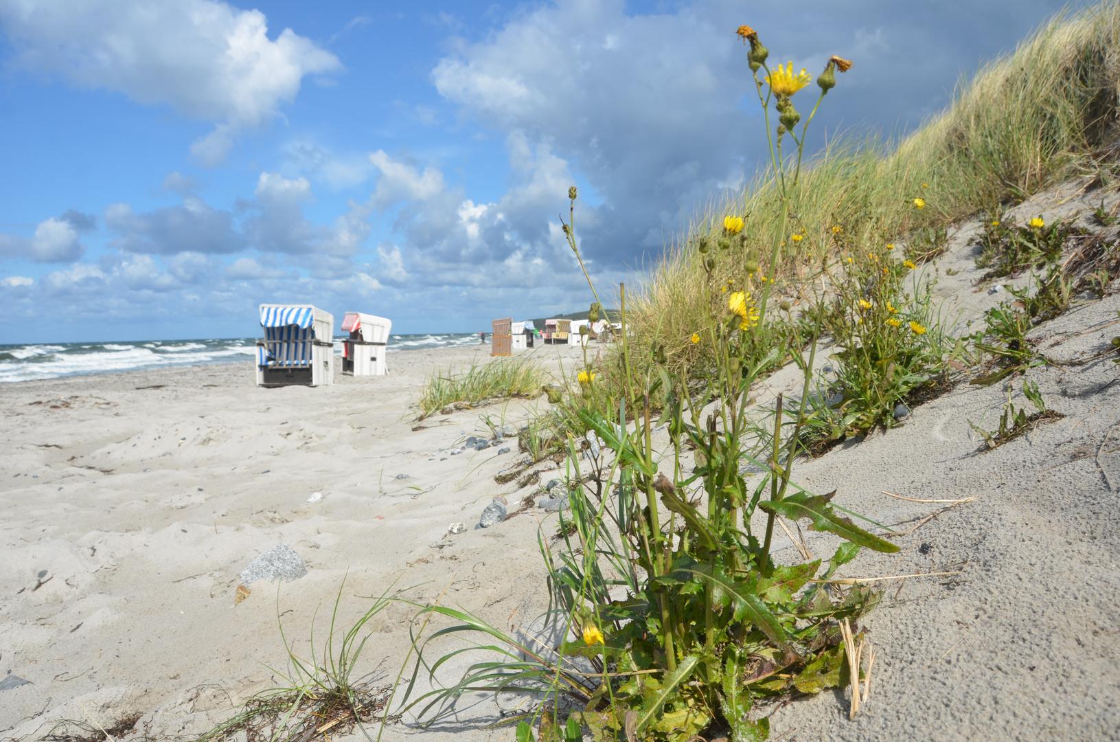 Die Naturwelt am Strand