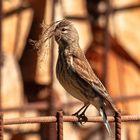 Die Nestbauer 1