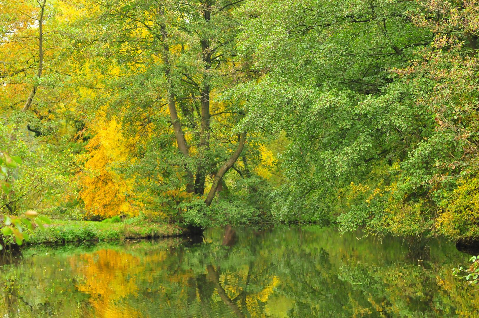 Die Nette und der Wald