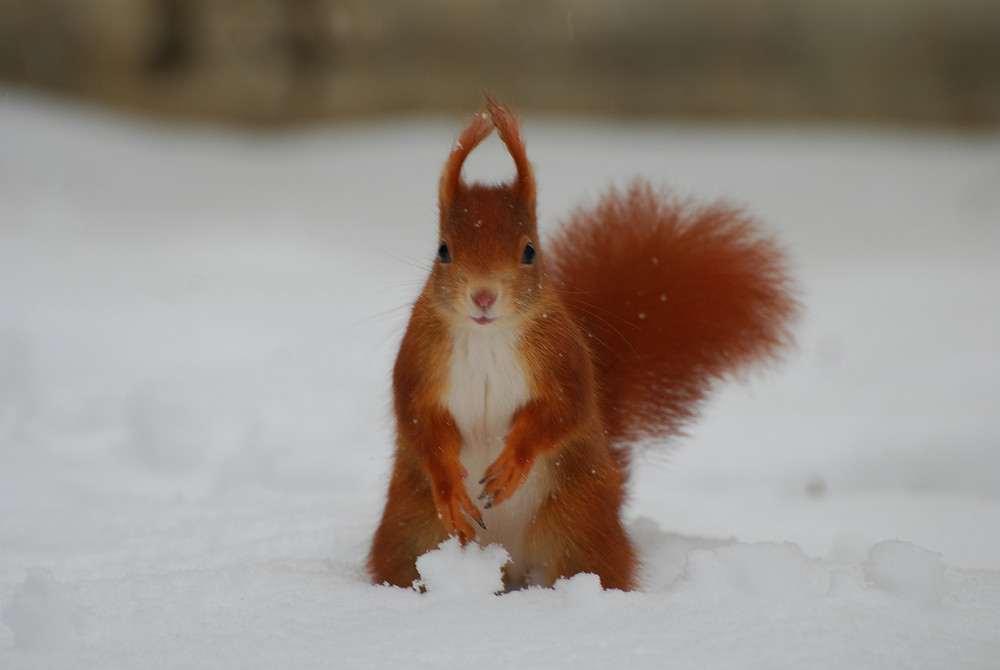 Die neue Puschelmode im Winter