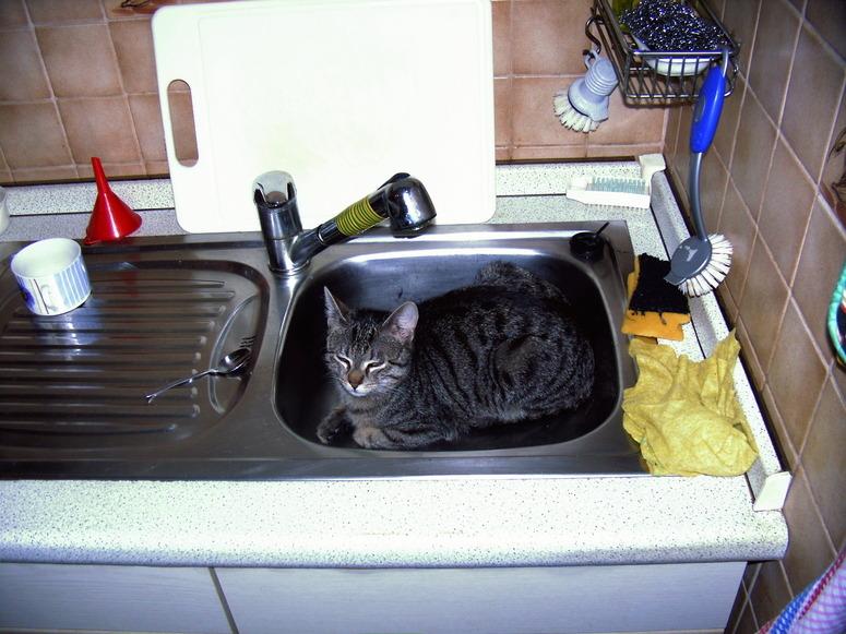 Die Neue Spulmaschine Foto Bild Tiere Haustiere Katzen Bilder
