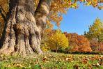 Die neuen Farben der Herbstsaison 2011..........