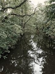 Die Niers - The River Niers