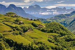 Die oberen Weinlagen  Bozens im Mai
