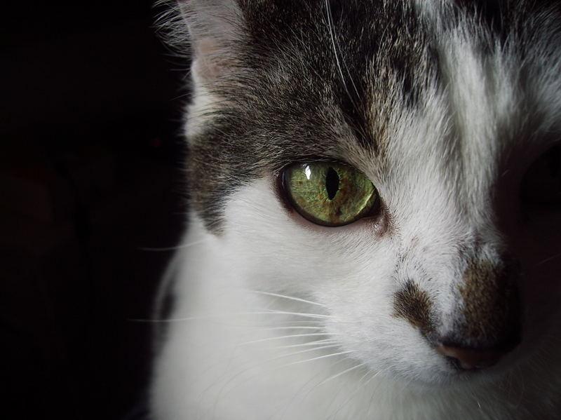 Die obligatorische Katze
