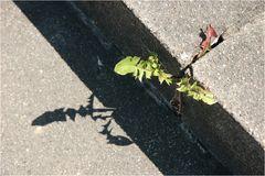Die obsiegende Natur wirft ihre Schatten voraus