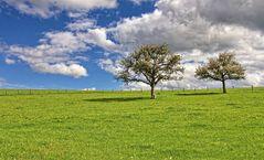 Die Obstbaumwiese