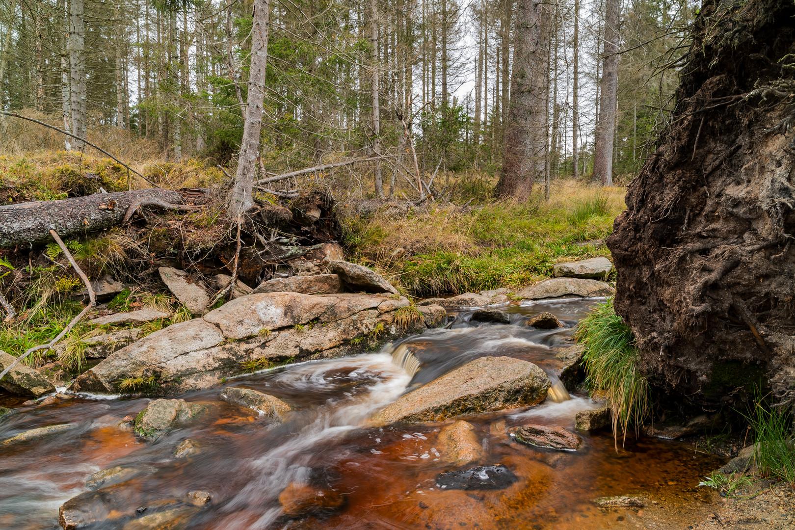 Die Oder im Harz