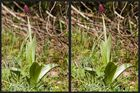 Die Orchideenzeit rückt näher