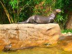 Die Otter im Duisburger Zoo