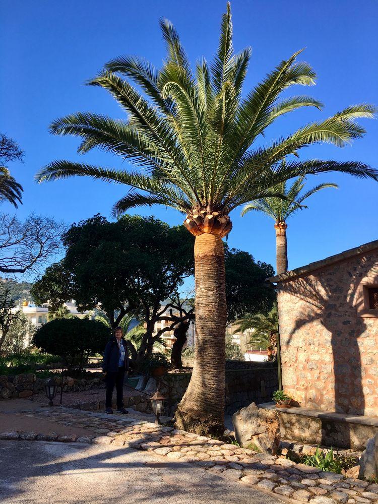 Die Palme neben unserem Häuschen