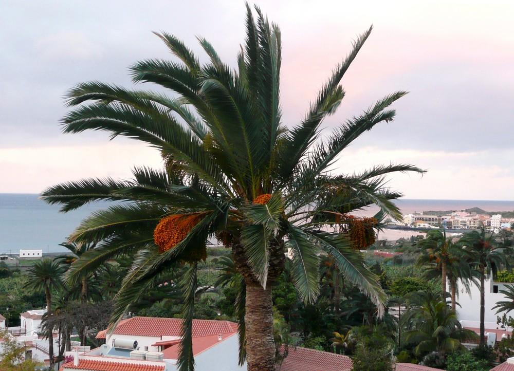 Die Palme vor meinem Haus