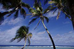 Die Palmen von Anuta
