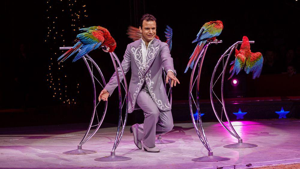 Die Papageien von Alessio
