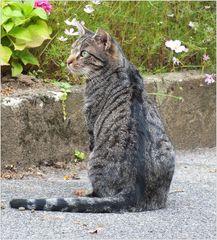 Die Pfarrgarten-Katze