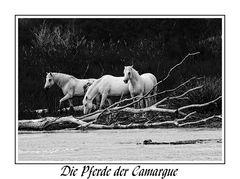 Die Pferde der Camargue