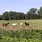 Die Pferde des Grafen von Rantzau