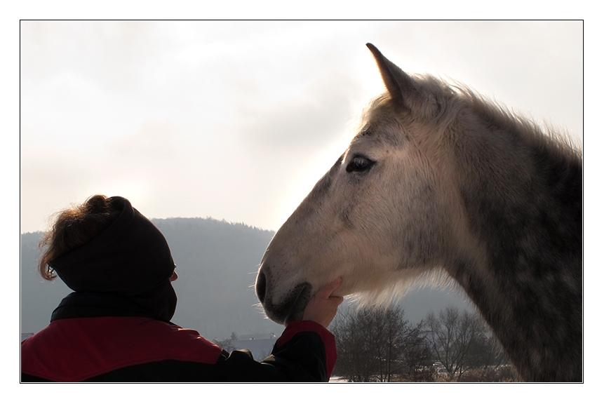 Die Pferdeflüsterin