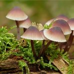 Die Pilzsaison ist eröffnet....