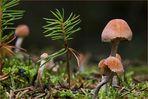 Die Pilzzeit...