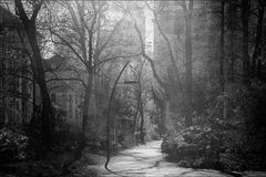 die Poesie des Großstadt-Dschungels