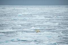 die Polarstern sticht in See... INFO zu Arktisexpedition