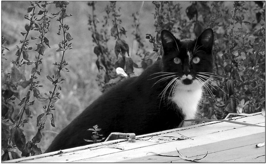 Die polyglotte Katze