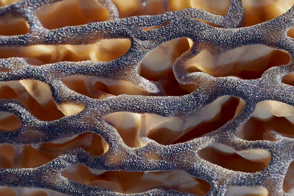 Die prächtigen Strukturen einer Morchel! - Les fascinantes structures d'une morille!