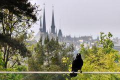 Die Rabe und die Kathedrale Notre Dame de Luxembourg