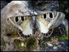 Die Raupe und der Schmetterling